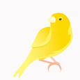 Canary Cash picture